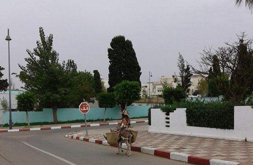 Mujer en burra camino mercado Asilah. El viaje me hizo a mi. Blog de viajes