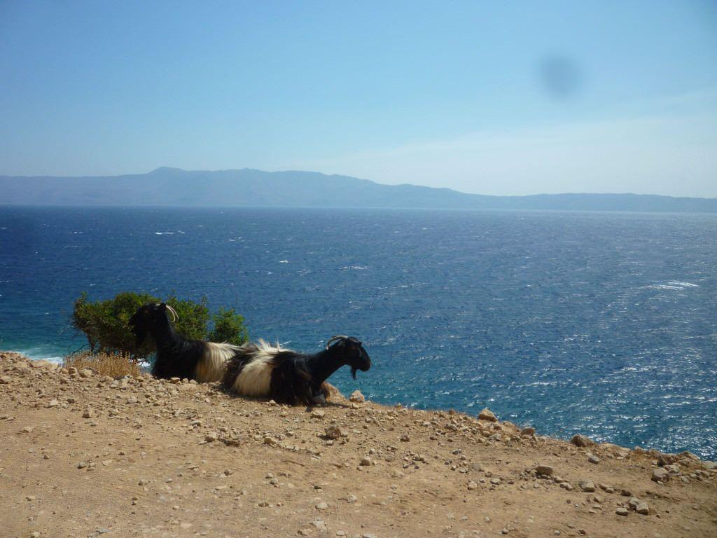 Creta. Cabras Kri Kri