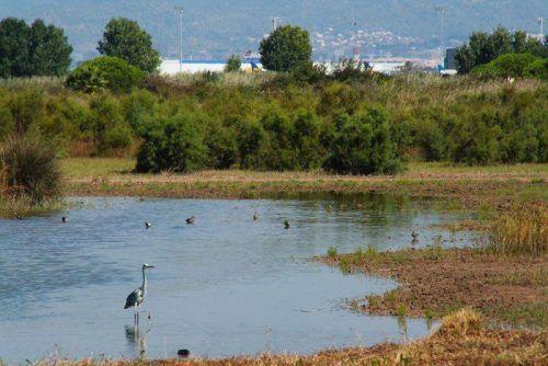 Los Espacios Naturales del Delta del Llobregat. La playa del Prat