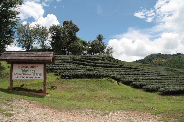 Plantaciones de te en Mae Salong. El viaje me hizo a mi. Blog de viajes. Tailandia