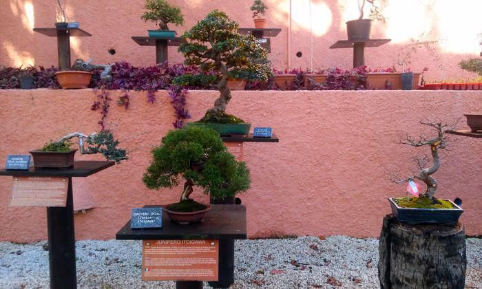Museo del bonsái de Almuñécar