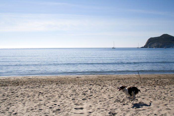Tuno en la playa de Almería