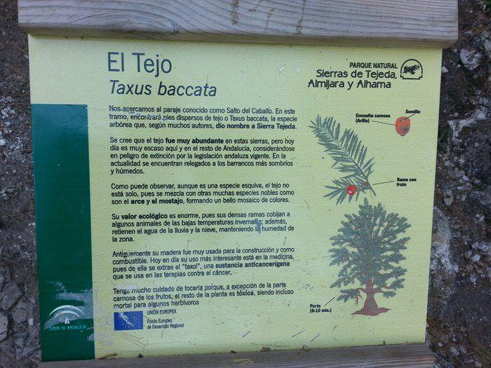 Cartel del Tejo