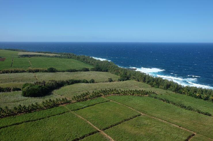 Campos de Azúcar en Mauricio