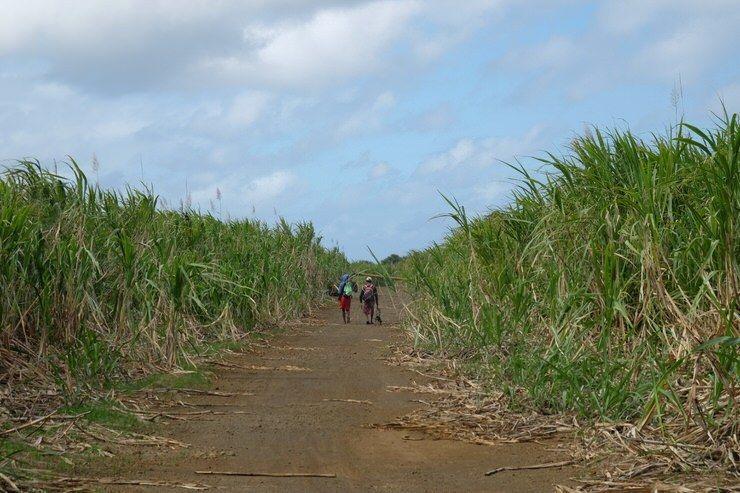 Personas paseando por los campos de Maiz.jpg