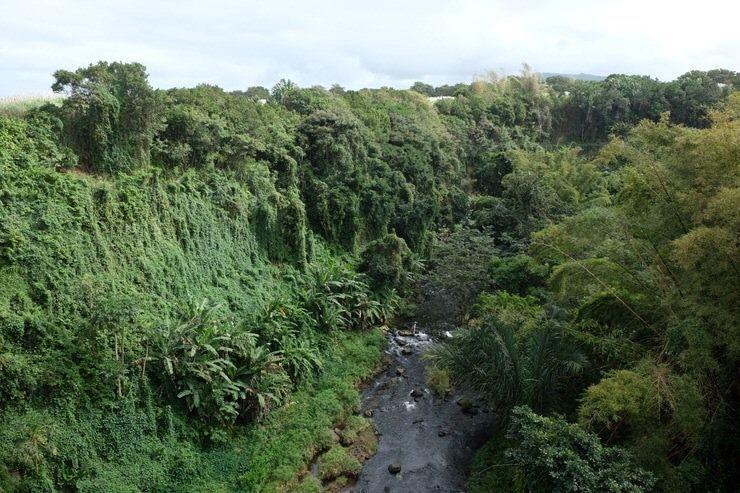 Reserva de las Anguilas. Isla Mauricio. El viaje me hizo a mi