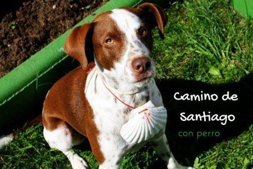 Hacer el Camino de Santiago con perro