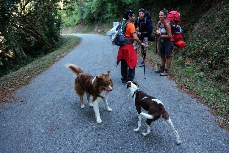 Hacer el camino con perro