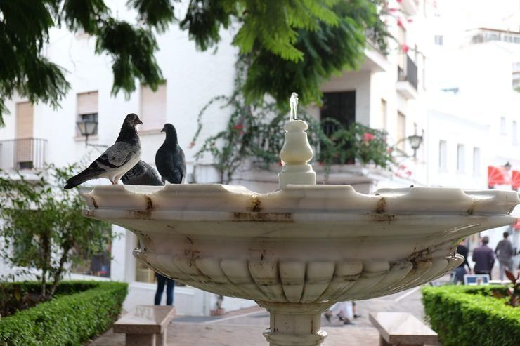 Fuente en el centro de Marbella