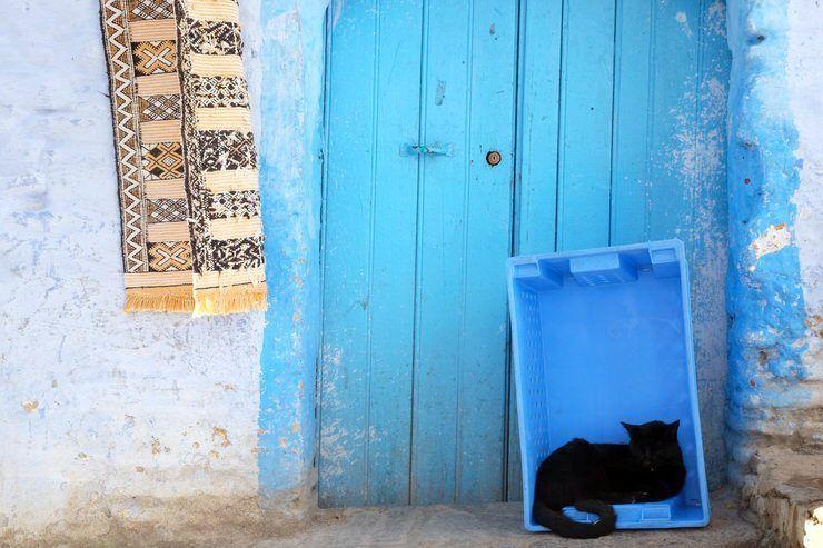Gato en Larache