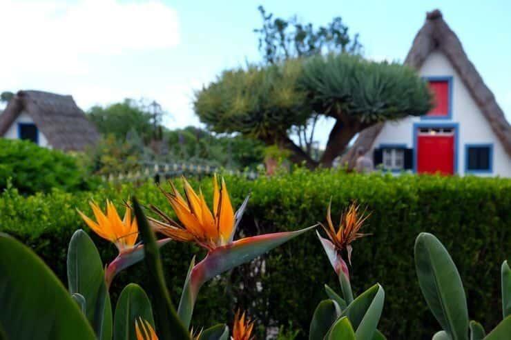 Estrilicia en Madeira. La isla de las flores