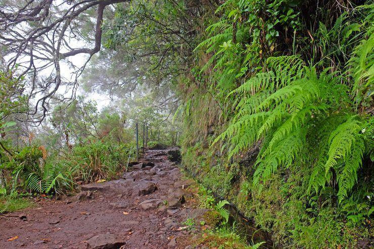 Laurisilva de Madeira