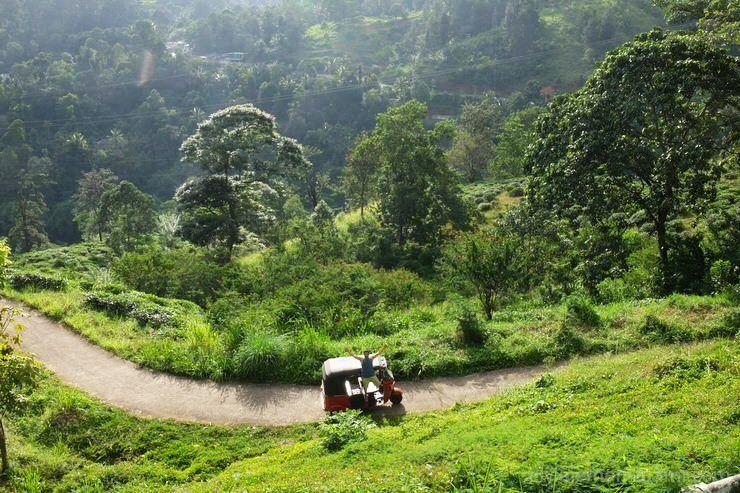 Recorrer Sri Lanka en tukk tuk
