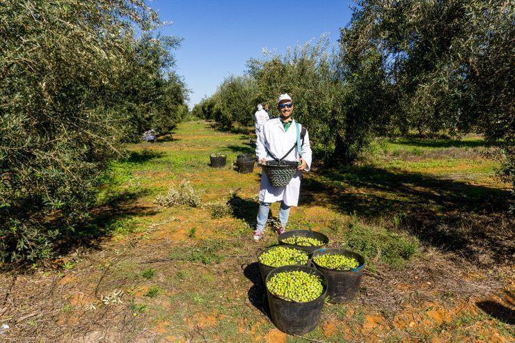 Oleoturismo en Sevilla