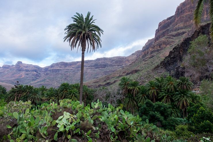 Gran Canaria en 4 días