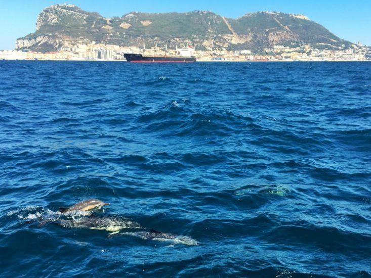 Delfines en Gibraltar