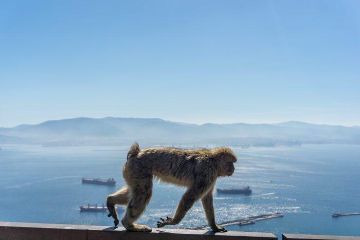 qué ver en Gibraltar