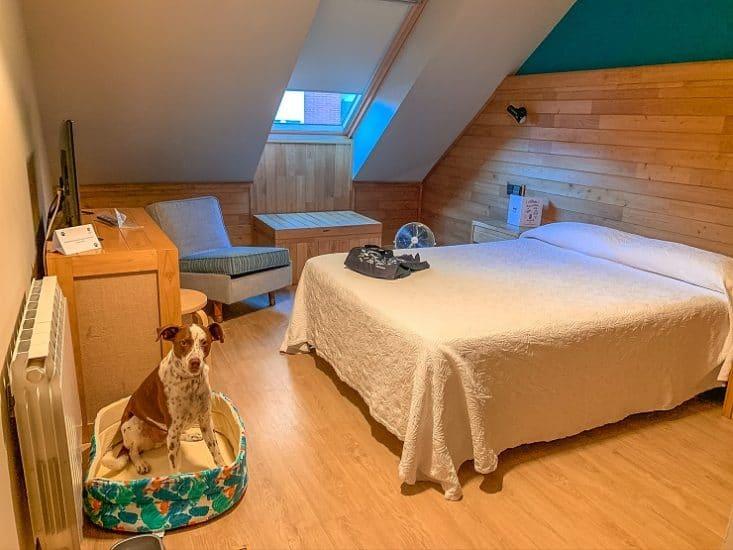 alojamiento en Gijon con perro