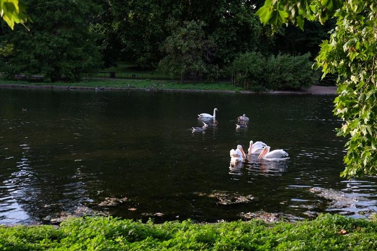 Hyde Park en verano